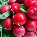 Radieschen Cherry Bell